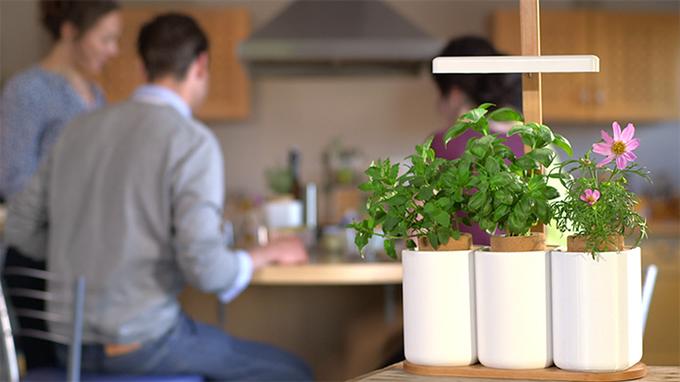 経済的でお財布にもやさしい!新鮮なハーブ、野菜を自宅で手軽に栽培できる「LILO」