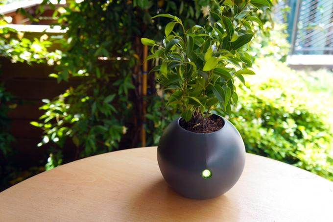 植物と会話しているみたい!植物の気持ちを代弁してくれるスマート植木鉢「Biom」