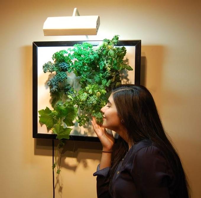 壁でガーデニングができる「The Wall Garden 」で野菜を収穫しよう