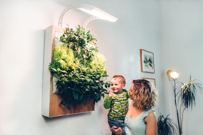 新鮮なオーガニック食材を自宅で栽培。室内家庭菜園をあなたの家にも