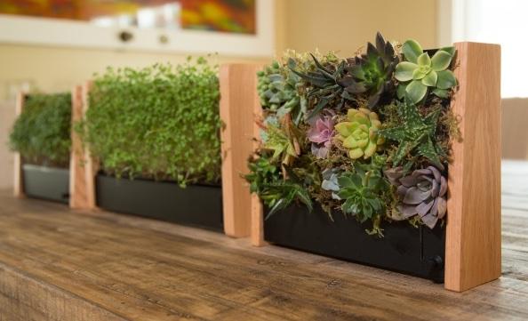 鮮やかに部屋を彩る!室内で効率よく栽培できて美しい一石二鳥のプランター