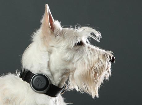 首輪型GPSトラッカー「Mishiko」。愛犬の健康状態も管理