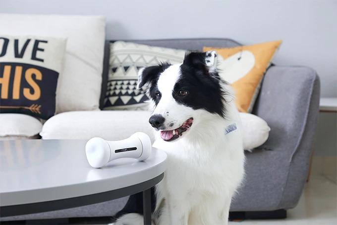 自律式骨型スマートトイ「WICKEDBONE」。愛犬の運動不足解消に最適