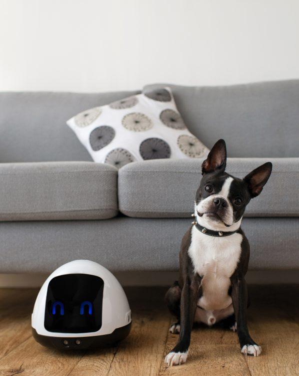 留守の間ペットと遊んでくれるロボット「MIA」。無駄吠えの抑制も