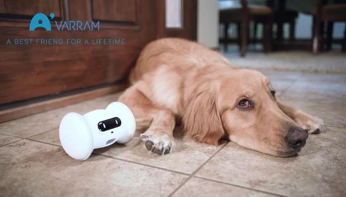 ペットと遊ぶAIロボット!犬や猫の運動不足を解消する「VARRAM」