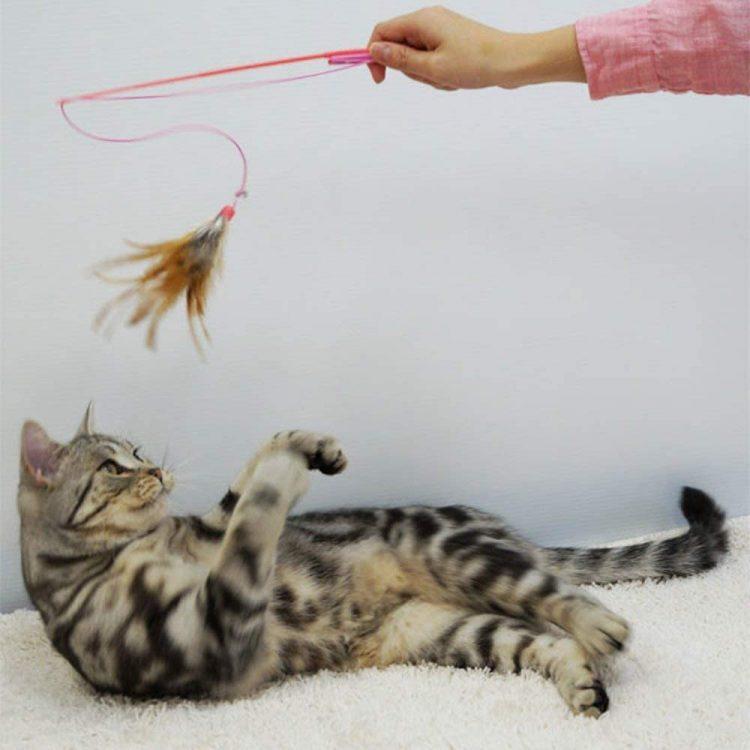 猫じゃらしのおすすめ10選。愛猫の運動不足解消やコミュニケーションに!