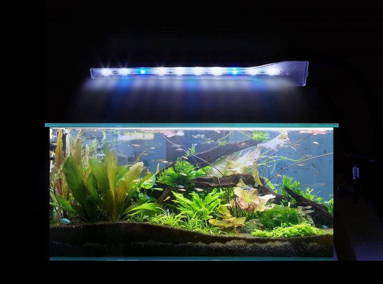 熱帯魚 ランキング 美しい