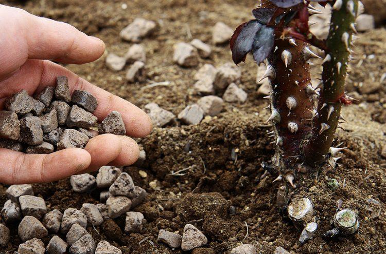 有機肥料のおすすめ9選。種類や使い方を詳しく解説