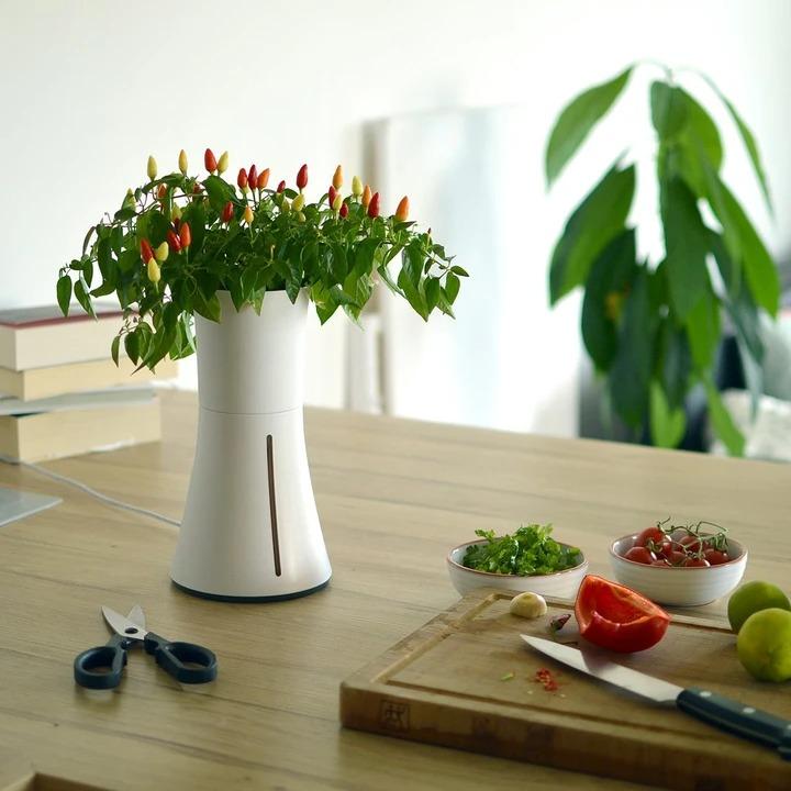 水耕栽培キットのおすすめ20選。簡単に家庭菜園を楽しめる人気アイテム