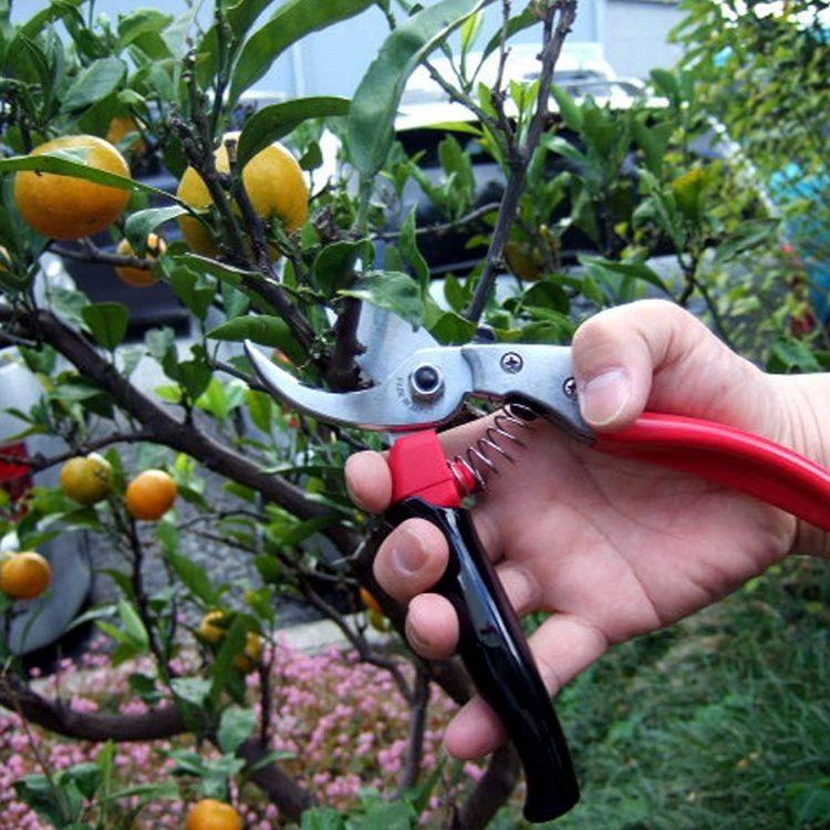 園芸用ハサミのおすすめ20選。使いやすい人気モデルを種類別にご紹介