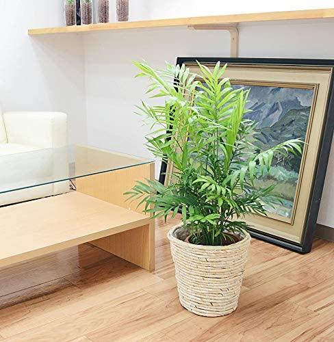 観葉植物のおすすめ33選。育てやすい種類からおしゃれな造花までご紹介