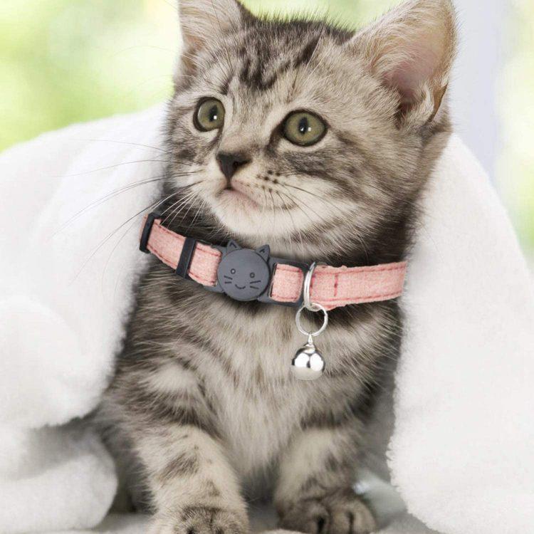猫用首輪のおすすめ18選。おしゃれで安全なモノを紹介