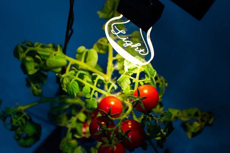植物育成ライトのおすすめ17選。屋内で花や野菜を育ててみよう